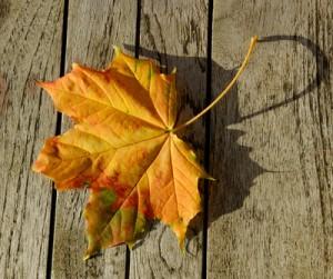 Herbst - Petra Bork / pixelio.de